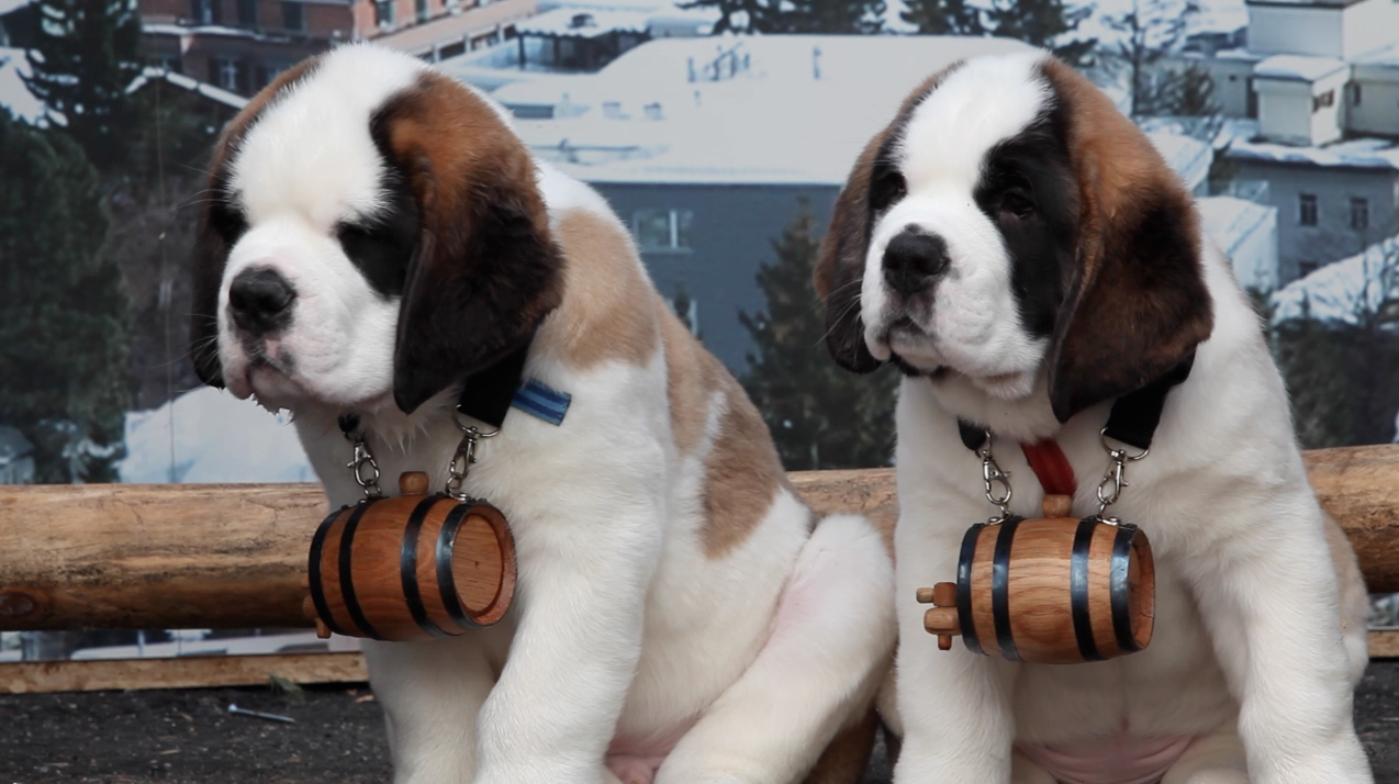 Mophie dispatches St. Bernards to rescue dying cellphones at SXSW